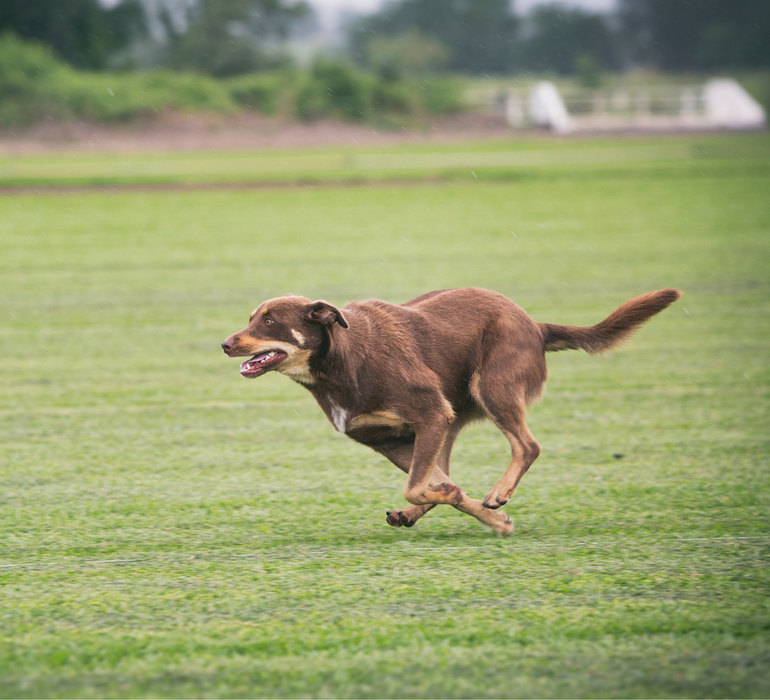 Dogs love to run on grass