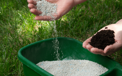 How to Avoid Over Fertilising Lawn