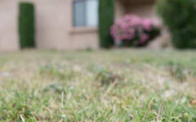 Making Your Grass Drought Resistant