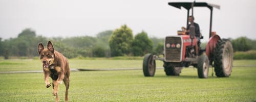 Protected: What Buy Turf Online Can Do for You