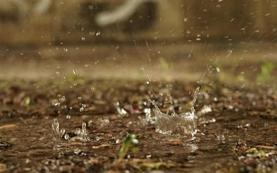 Has Your Soil Stopped Absorbing Water?