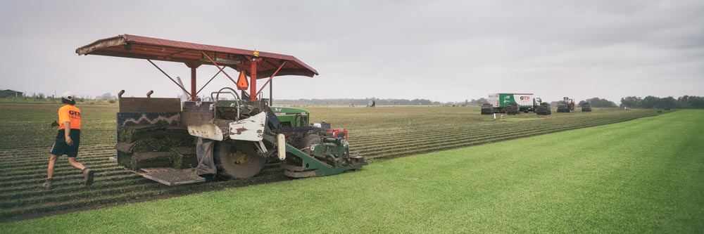 new practices for turf in australia