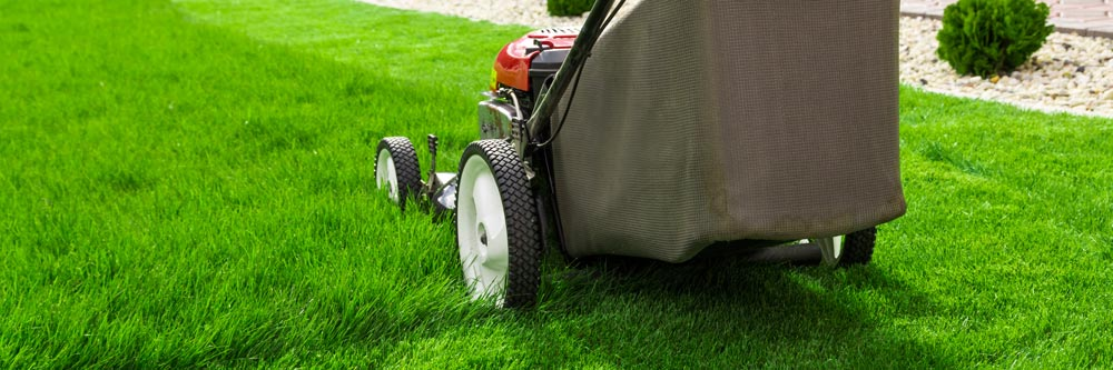 Why You Should Be Regularly Mowing Your Lawn