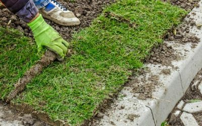 Plant Your New Lawn Now
