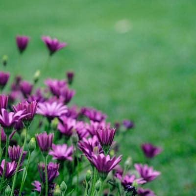 spring care