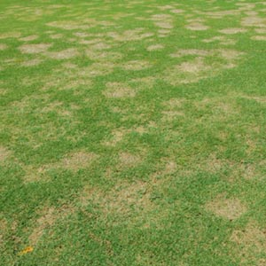 Spring Dead Spot: Are You at Risk?