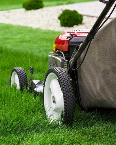 Mowing Buy Turf Online
