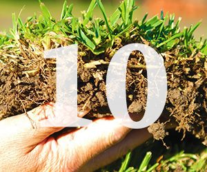 Top Ten Lawn Care Tips