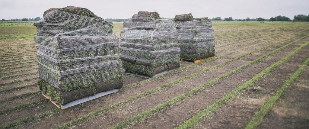 Turf Cut and Loaded onto Pallets Ready for Delivery - Campbelltown