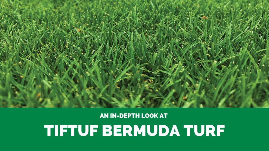 An In-Depth Look at TifTuf Bermuda Turf
