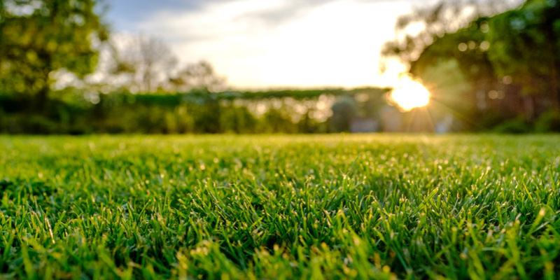 Shade and Frost Resistance - TifTuf Bermuda Turf