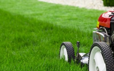 Bring Your Lawn Back to Life with Spring Lawn Care