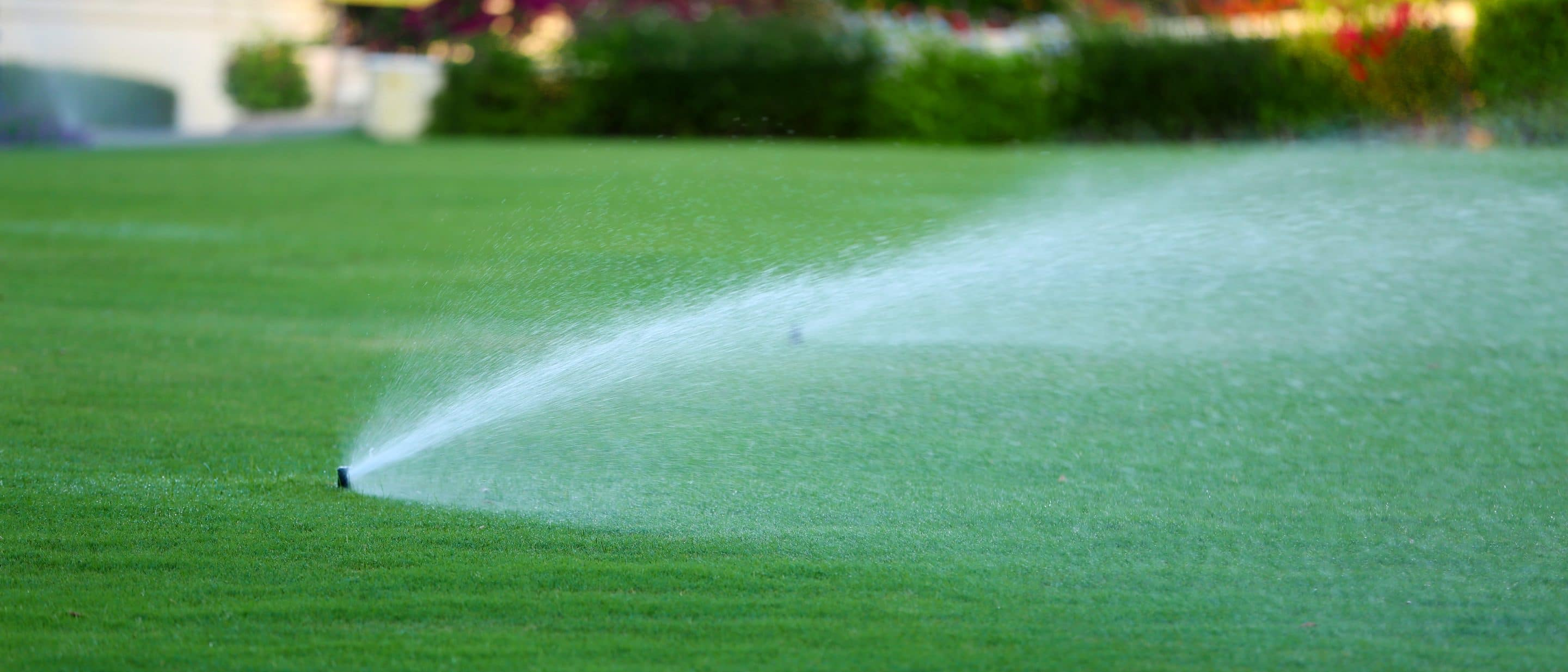 Watering in lawn fertiliser