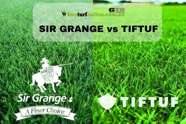 SIR GRANGE VS TIFTUF TURF