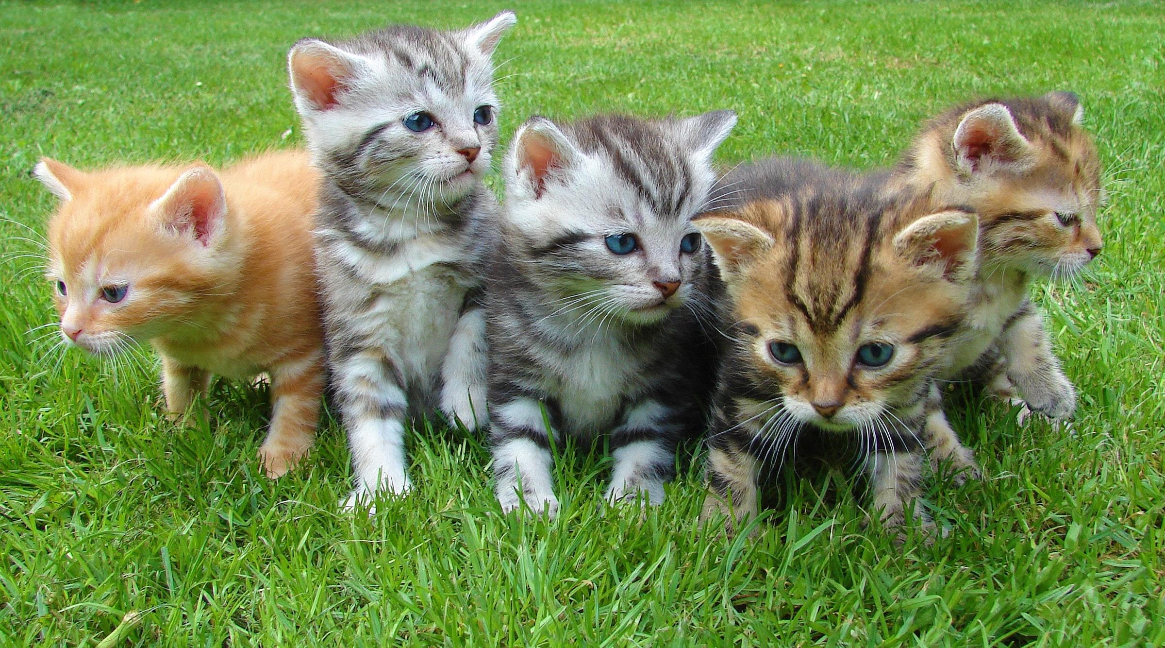 Cat Friendly Lawn Care