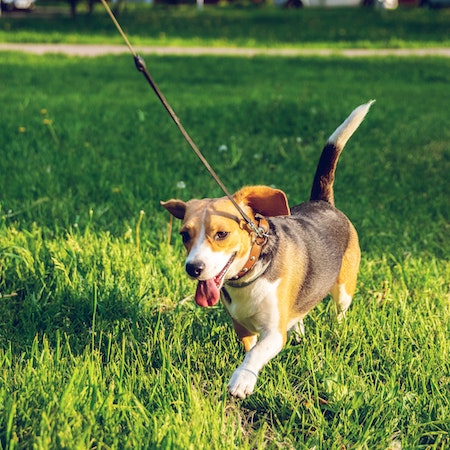 How to Choose the Best Grass for Dogs and Other Pets