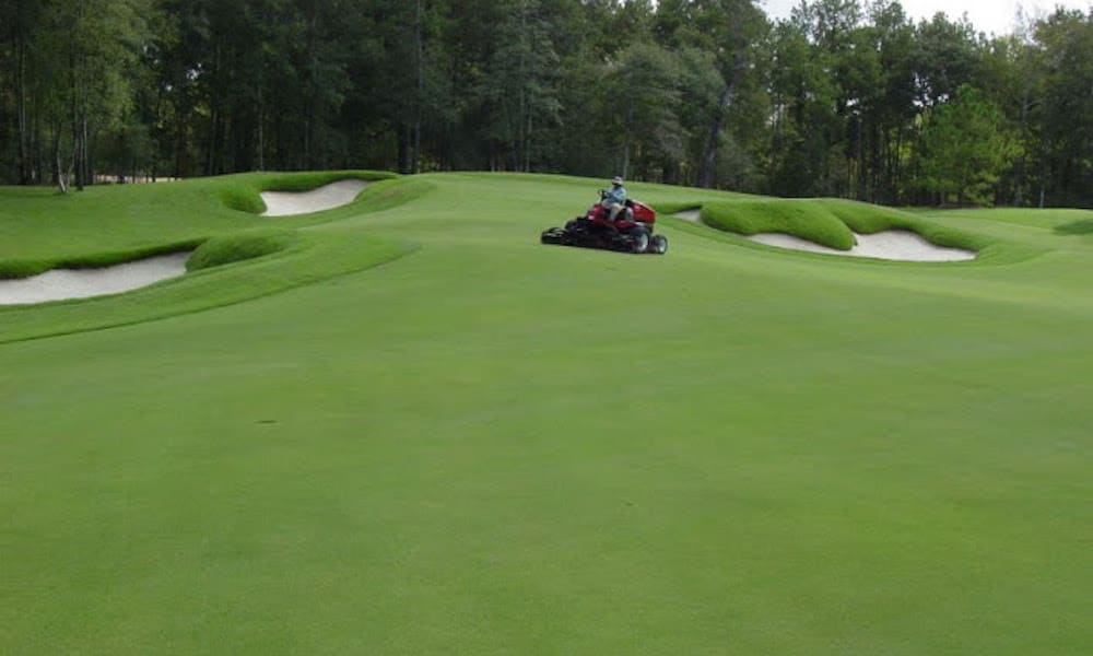 Zoysia is an ideal choice for drought prone areas