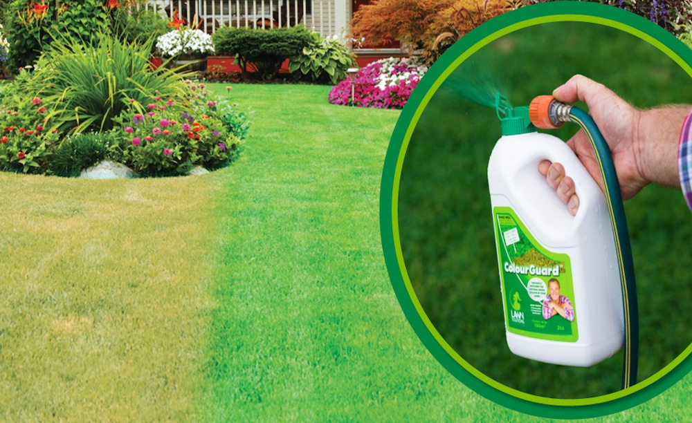 ColourGuard will keep your lawn looking perfectly green
