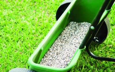 How to Avoid Common Lawn Fertiliser Mistakes