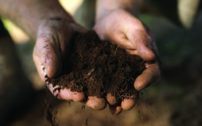 Giving Your Lawn the Soil it Needs