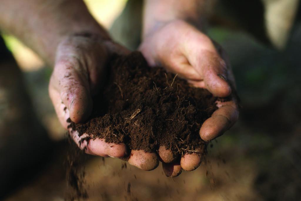 Soil renovation