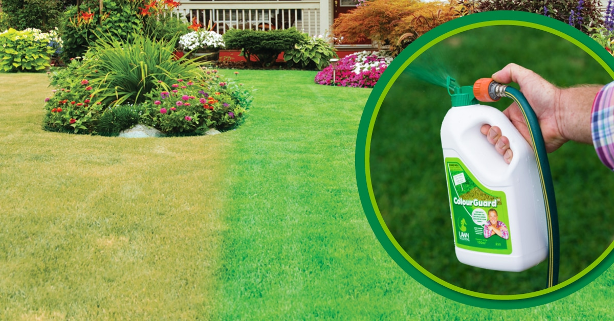 Applying  liquid lawn fertilisers will provide a much quicker response from your grass
