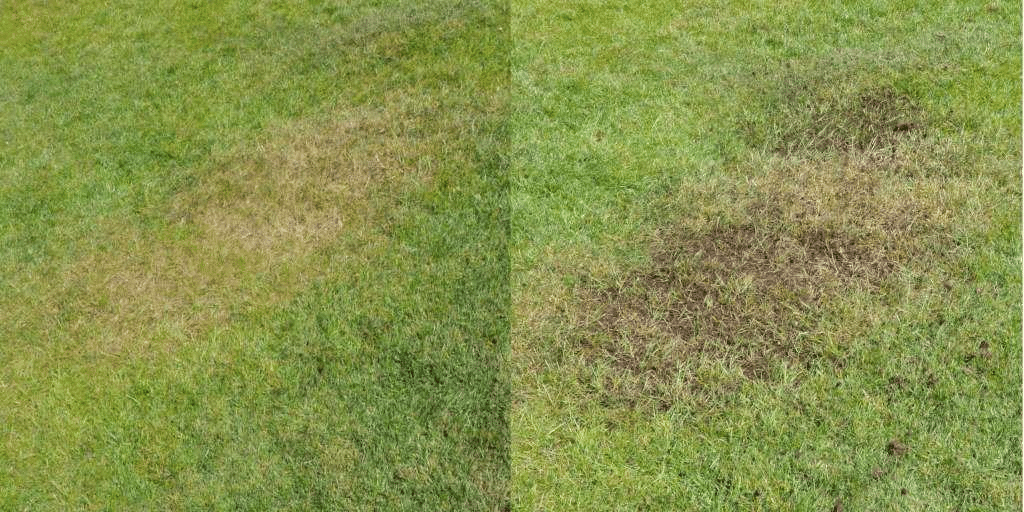 Topdressing A Lawn