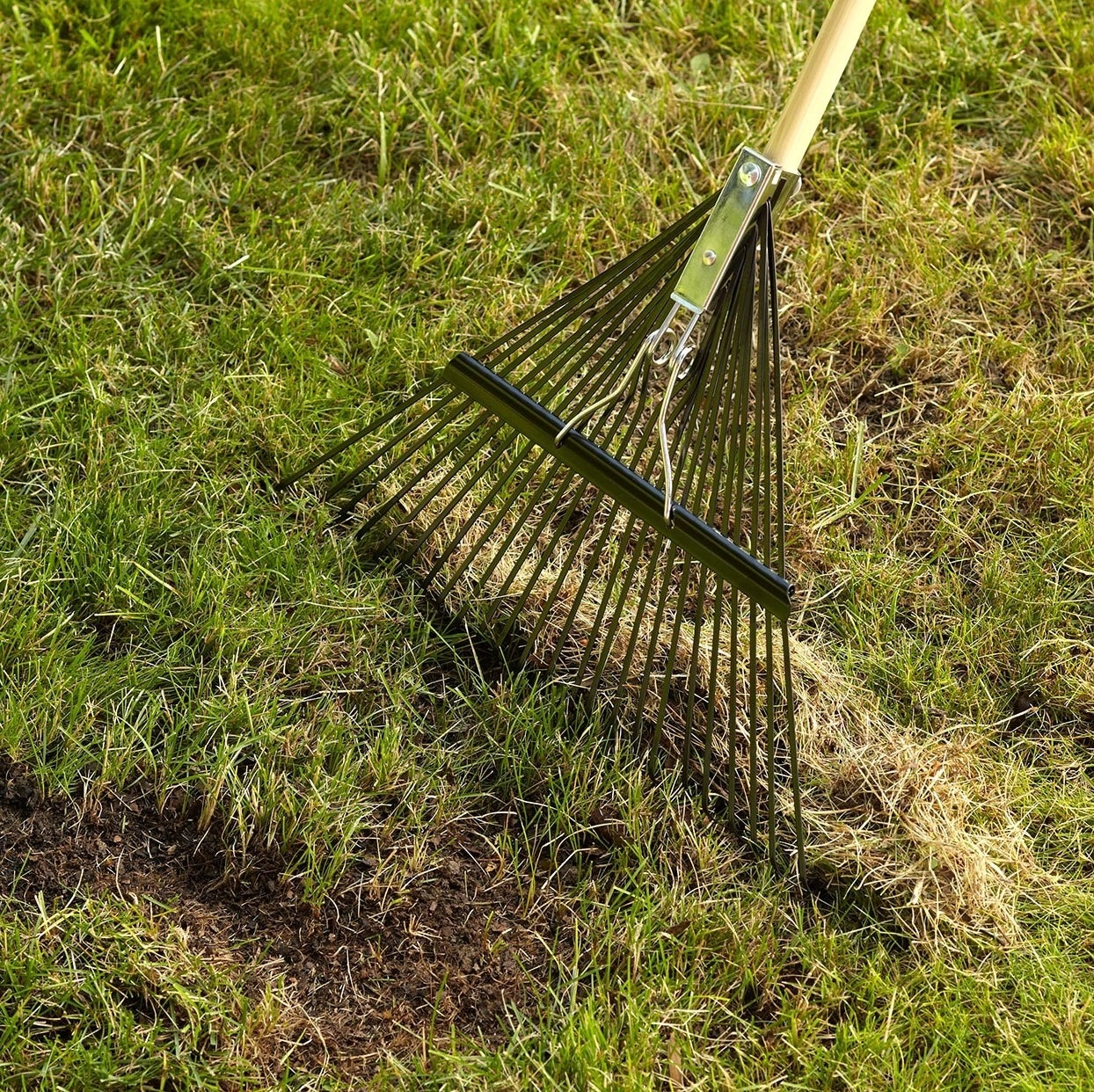 Dethatching Your Lawn With A Rake