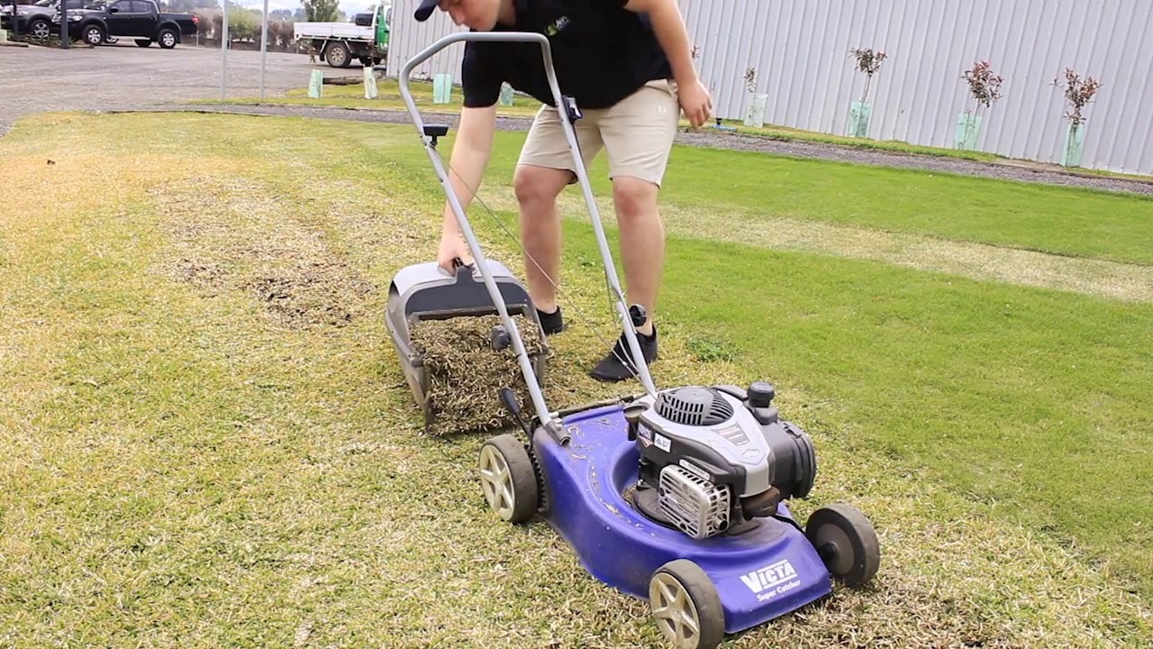 Mowing too low too quickly, you risk scalping your lawnt