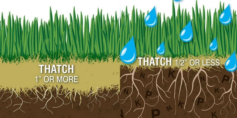 Thatch is a layer of grass blades, stolons, rhizomes and other organic matter that has not yet broken down or decomposed.