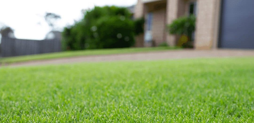 TifTuf Bermuda Turf Recognised for its Water Conservation
