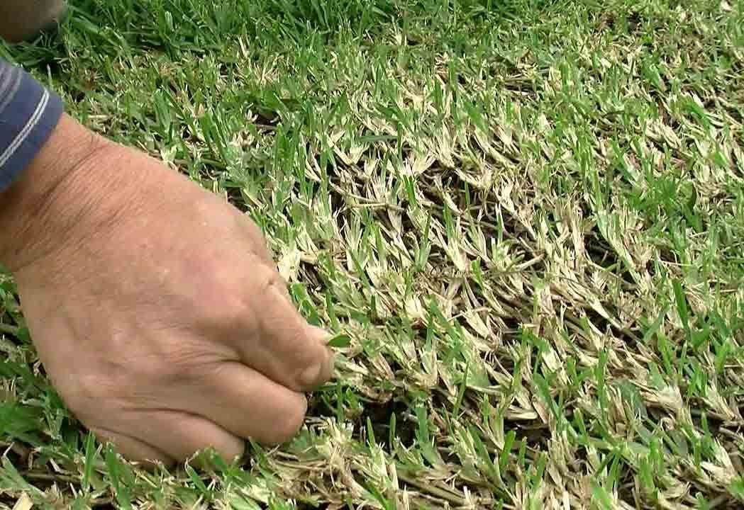 When to dethatch your lawn