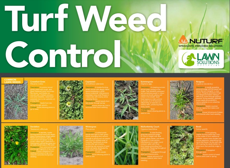 Turf Weed Guide - How to Identify all the most common weeds in your lawn