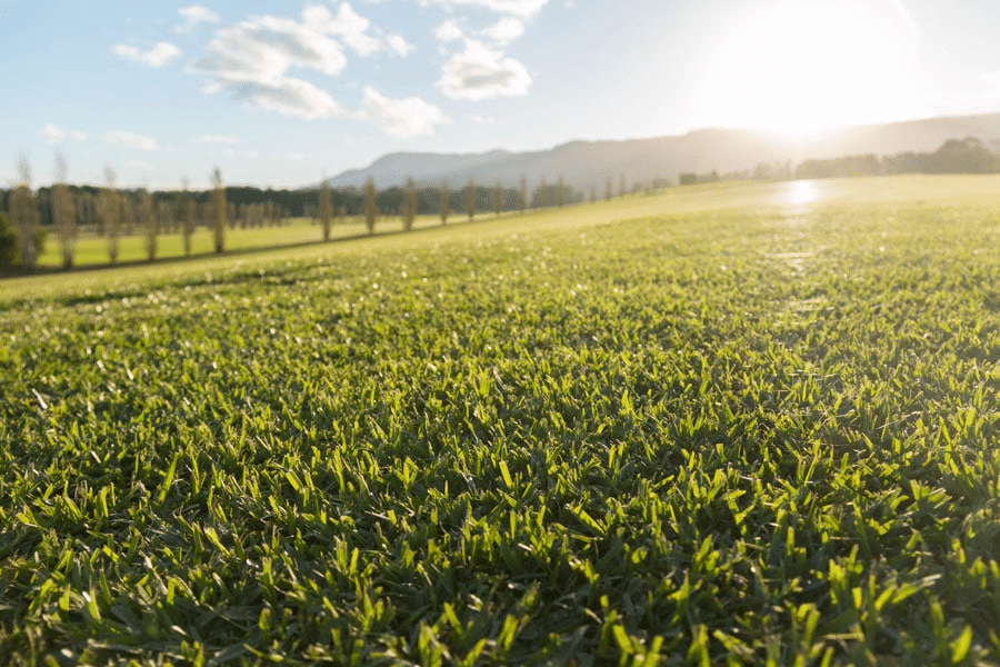 Buy Turf Online is here to help with any of your turf needs