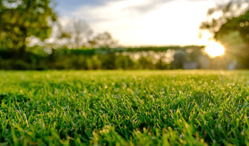 The best choice for a large lawn is spraying liquid fertilizer