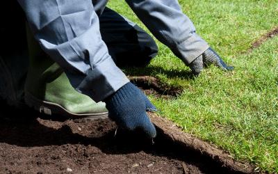 Turf Rolls 101: Where High-Quality Lawns Start